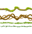 twisted wild lianas branches set vector image vector image