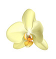 white tropical exotic flower realistic isolated vector image vector image