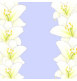 white lily flower border isolated on purple vector image