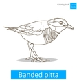 banded pitta bird learn birds coloring book vector image vector image