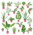 flat pot plants set vector image