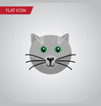 isolated cat flat icon kitty element can vector image vector image