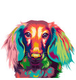 dachshund dog in colorful vector image