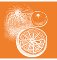 Hand drawn orange citrus in vector image vector image