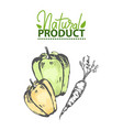 natural product bell pepper and carrot drawing vector image