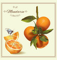 Realistic of mandarin vector image vector image