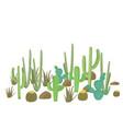set cactus plants flowering cacti vector image