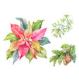 set of christmas plants poinsettia fir branch vector image