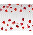 set of naturalistic rose petals on transparent vector image