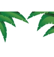 Palm branches vector image