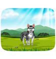a husky in the pack background vector image
