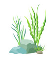 aquatic plants with stones vector image vector image