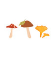 autumn edible and inedible mushrooms birch vector image