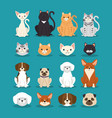 dogs and cats pets characters vector image