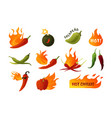 hot pepper cartoon green and red chilli spice vector image