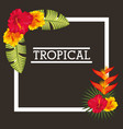 tropical leaves flowers card vector image