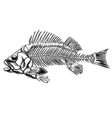 black fish skeleton vector image vector image