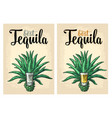 cactus blue agave with glass tequila vintage vector image vector image