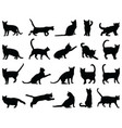 silhouettes cats vector image vector image