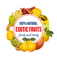 exotic fruit icon for food market or grocery store vector image vector image