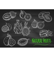 Exotic fruits chalk sketches on blackboard vector image