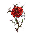 rose with thorns tattoo vector image