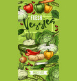 vegetables and beans sketches fresh veggies vector image