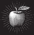 apple - vintage engraved vector image vector image
