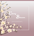 beautiful cherry blossom background vector image vector image