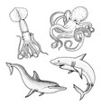 sea creature or fishes dolphin and white shark vector image vector image