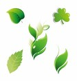 Set of Green Leaves Floral Leaf Element vector image vector image