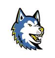 siberian husky dog mascot vector image