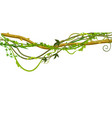 twisted wild lianas branches banner vector image