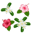 Set of tropical flowers hibiscus and plumeria vector image