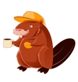 beaver and cup coffee vector image