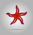 summer concept represented by red sea star icon vector image