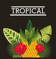 tropical flower leaves fruit card vector image