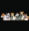 american staffordshire group dogs vector image
