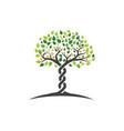 family tree symbol icon logo vector image