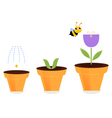 Flower in pots growth stages isolated on white vector image vector image