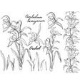 black and white orchid cimbidium vector image vector image
