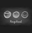 chalk sketch of hazelnut vector image vector image