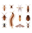 harmful insects set centipede moth diplura ant vector image