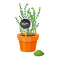 thyme plant and powder spice vector image vector image