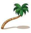 A coconut tree vector image vector image