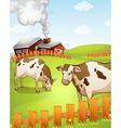 cows vector image vector image