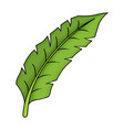tropical leaf green icon tree floral design vector image