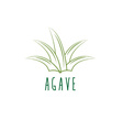 agave design template vector image