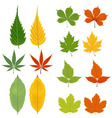 Autumn leaves green and yellow vector image vector image