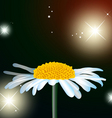 flower chamomile vector image vector image